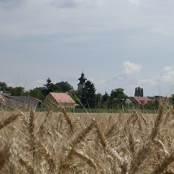 Die Natur um Stammersdorf