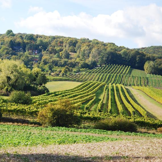Der Bisamberg – Natura 2000 Gebiet